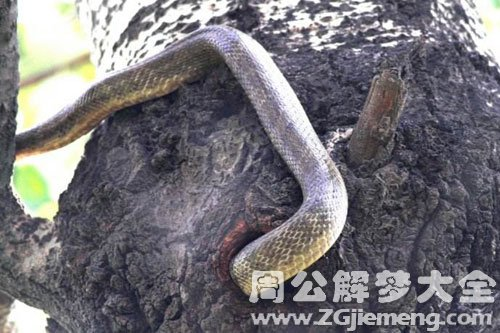 梦见蛇钻进洞里