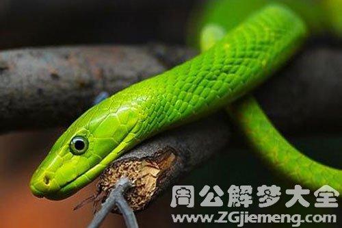 梦见害怕蛇_梦到害怕蛇是什么意思_周公解梦大全网