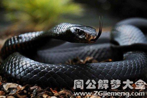 孕妇梦见黑蛇追自己