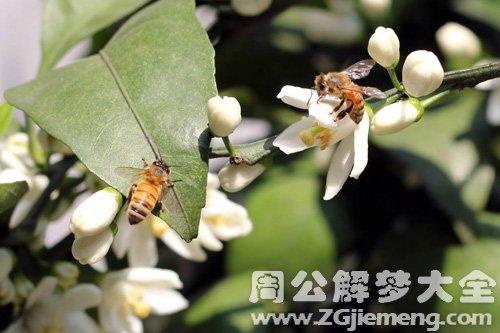 梦见蜂群采蜜