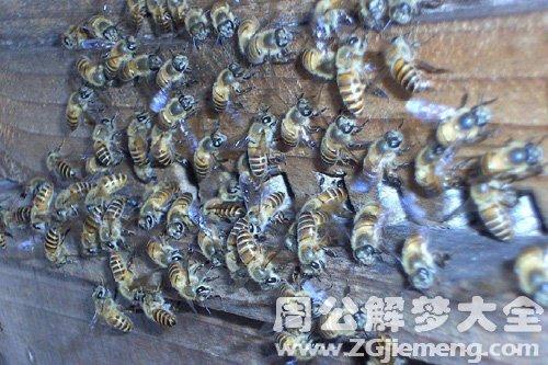 梦见蜂群死了