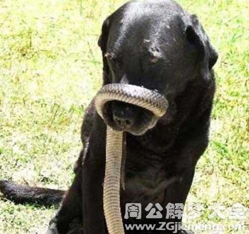蛇缠脚没被咬