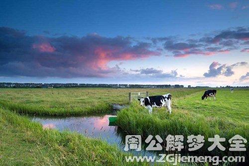 梦见草场发大水