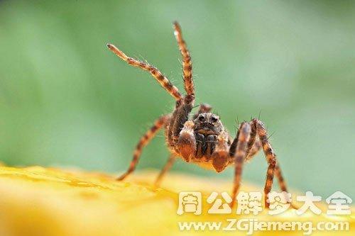 毒蜘蛛自己中毒