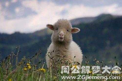 梦见羊吃肉