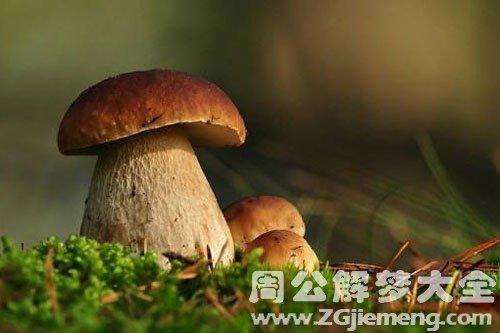 捡了很多蘑菇