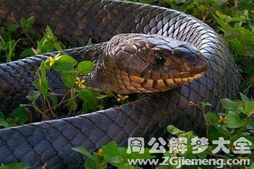梦见吃毒蛇_梦到吃毒蛇是什么意思_周公解梦大全网