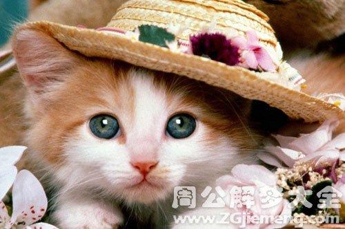 梦见猫变成小女孩