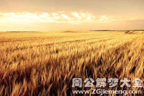 做梦梦到麦子地