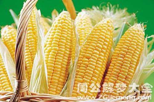 胎梦梦见玉米