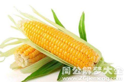 梦见玉米穗