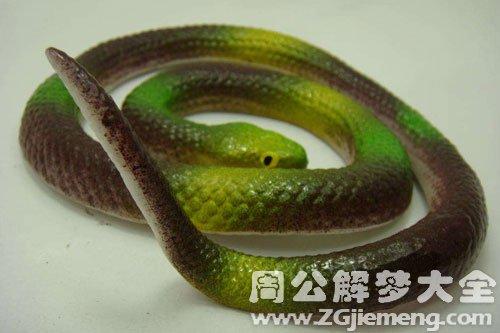 梦见玩具蛇