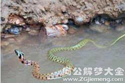 梦见蛇过河