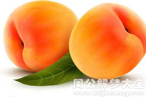 梦见满树黄杏