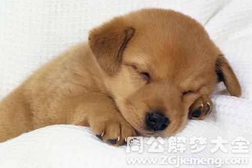 梦见可爱小狗