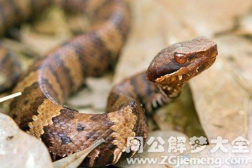梦见蛇咬生殖器