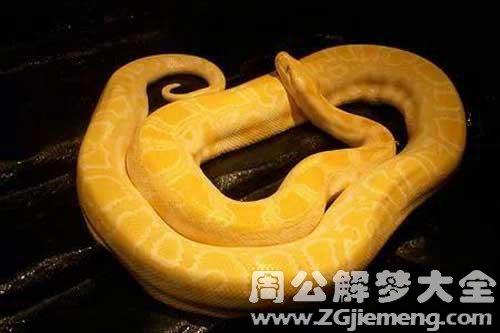 梦见一条黄金蛇