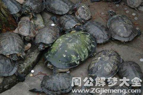 梦见很多龟在水里游