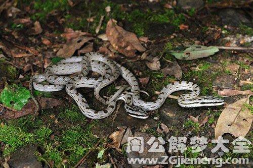 女人梦见打蛇