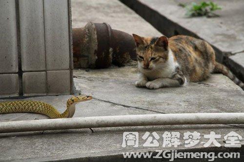 梦见猫和蛇在一起