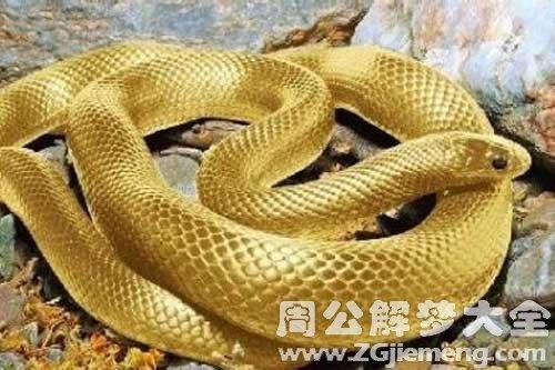 梦见3头蛇_梦到3头蛇是什么意思_周公解梦大全网