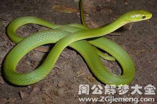 女人梦见蛇好吗