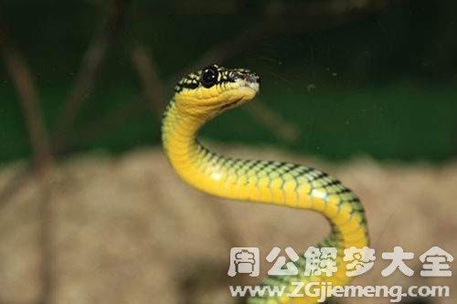 梦见一条蛇
