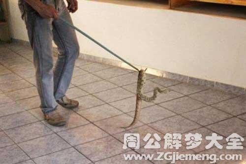 梦见蛇进门