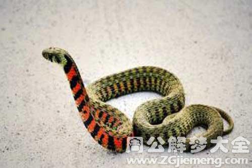 梦见蛇生子_梦到蛇生子是什么意思_周公解梦大全网