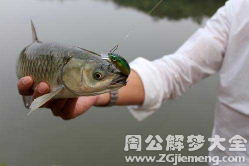 梦见抓到草鱼 梦到抓到草鱼是什么意思 周公解梦大全网