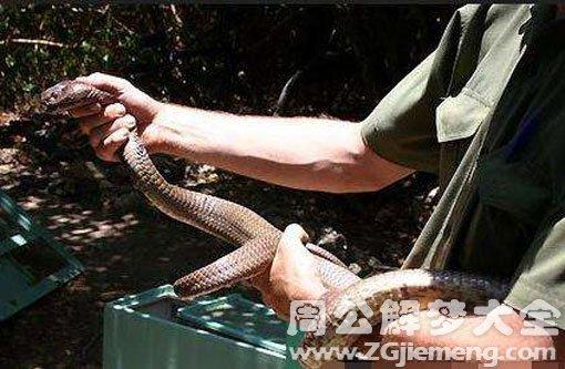 孕妇梦见别人把蛇打死