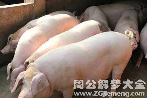 梦见三个猪