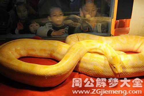 梦见被黄色的蛇追