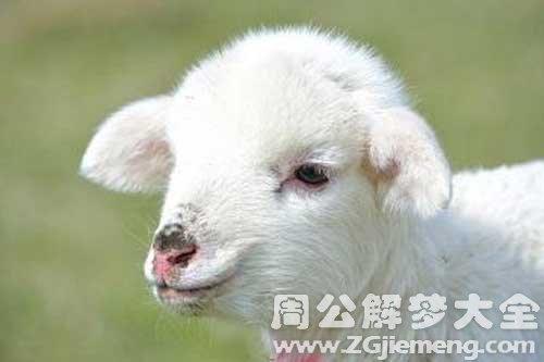 梦见牵着羊