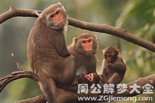 女人梦见猴子