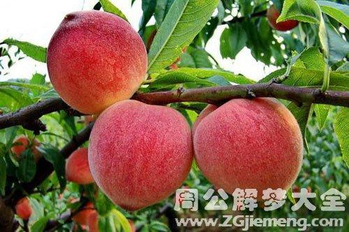 从树上摘桃吃
