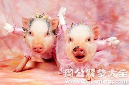 梦见两头大猪