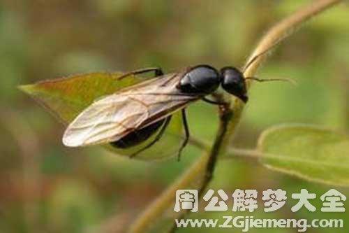 梦见飞蚂蚁