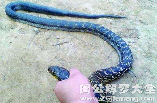 梦见抓一条大蛇