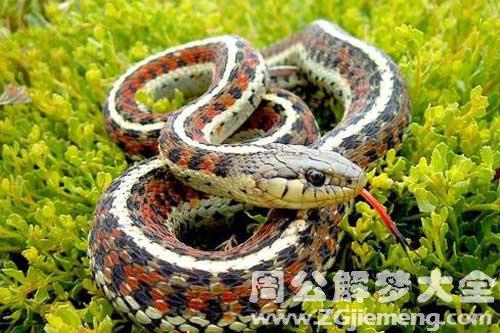 梦见蛇很凶猛_梦到蛇很凶猛是什么意思_周公解梦大全网