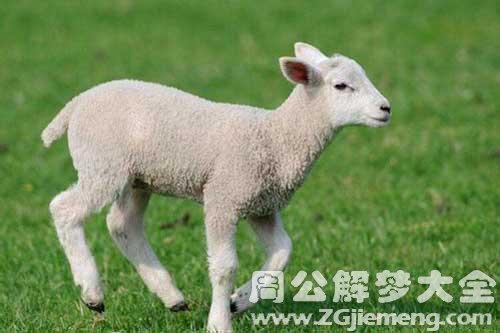 梦见别人家的羊