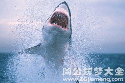 梦见梦见别人被鲨鱼咬
