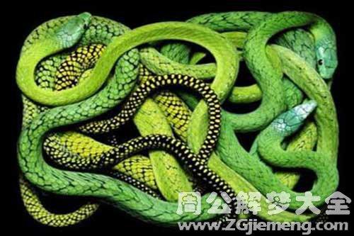 梦见满屋蛇_梦到满屋蛇是什么意思_周公解梦大全网