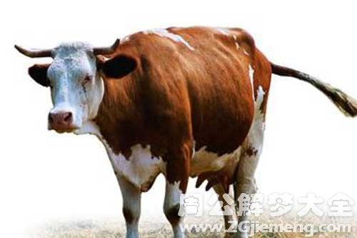 游戏中心下载:73年的8月的牛和什么最配?
