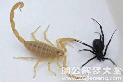 孕妇做梦梦见蜘蛛_梦见蜘蛛蝎子是什么意思_梦到蜘蛛蝎子好不好_大鱼解梦网