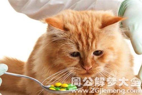 梦见生病的猫