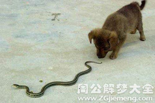 梦见狗把蛇吃了