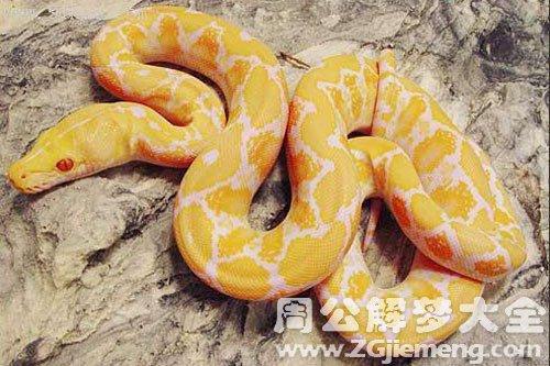 女人梦到金黄蛇预示着什么意思