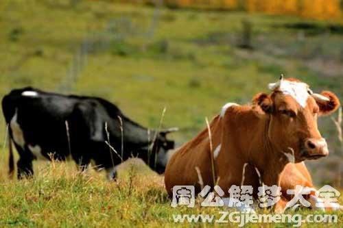 梦见牛回家
