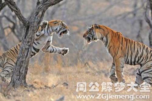 梦见与虎搏斗